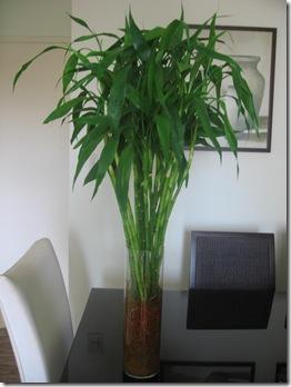 Bambu_Make 003